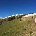 Above Alpine aid